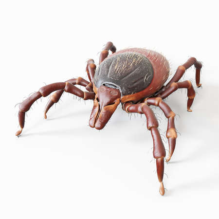 3d rendered, medically accurate illustration of a tick