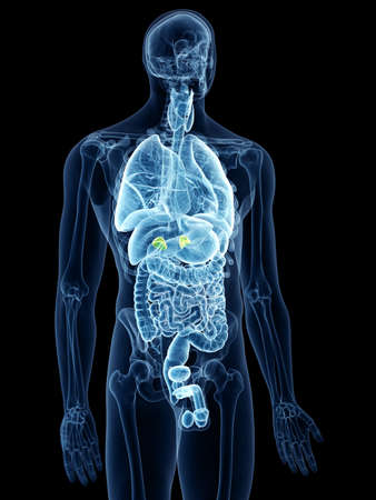 3d rendered, medically accurate illustration of the adrenal glands Stockfoto