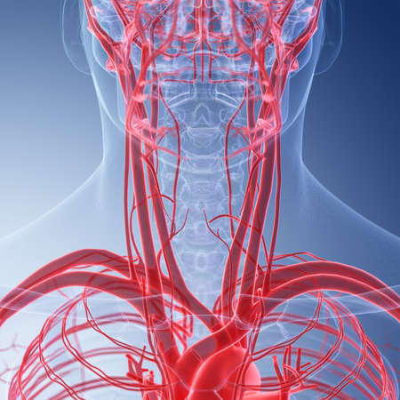 3d rendered medically accurate illustration of the human neck blood vessels