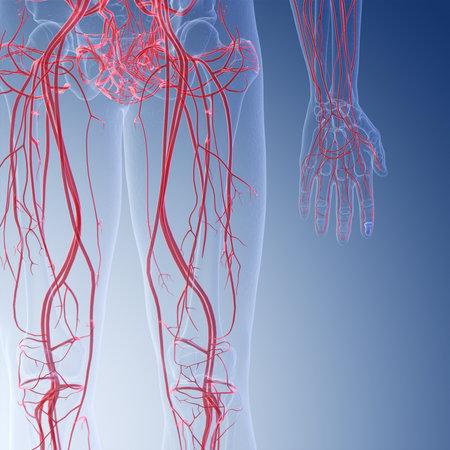 3d rindió la ilustración médicamente exacta de los vasos sanguíneos de la pierna humana Foto de archivo