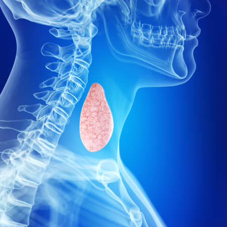 medically accurate illustration of the healthy thyroid gland
