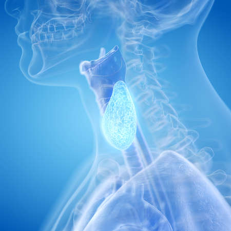 3d rendered, medically accurate illustration of the thyroid gland