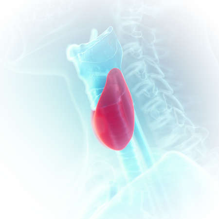 3d rendered medically accurate illustration of the thyroid Stock Photo