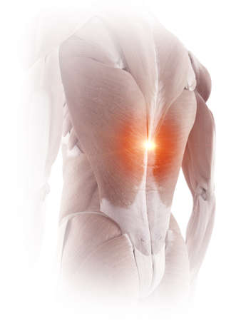 medical accurate illustration of the back muscles showing pain Archivio Fotografico