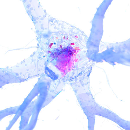 3d rendered, medically accurate illustration of a nerve cell Stock Photo