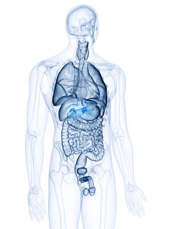 3d rendered, medically accurate illustration of the adrenal glands Banque d'images - 107795620