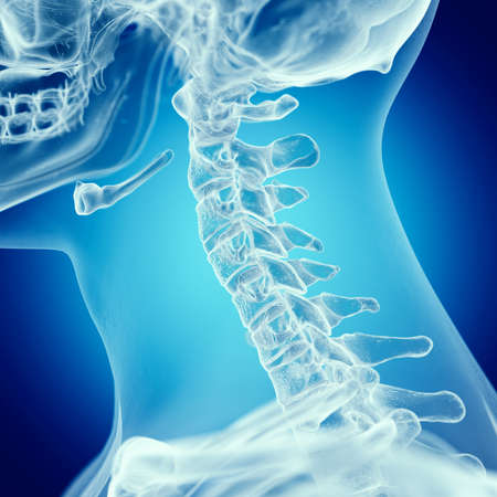 3d rendered medically accurate illustration of the upper spine Stok Fotoğraf
