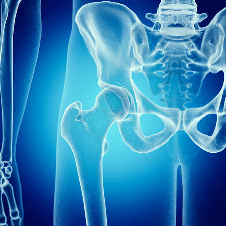 3d rendered medically accurate illustration of the skeletal hip