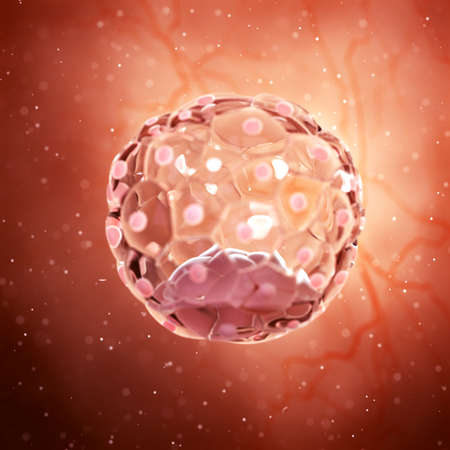 3d rendered medically accurate illustration of a blastocyst Banco de Imagens