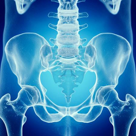 3D Rendering accurato dal punto di vista medico illustrazione del sacro