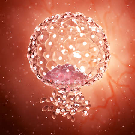 3d rendered medically accurate illustration of an implanted blastocyst Stock Illustration - 108391554