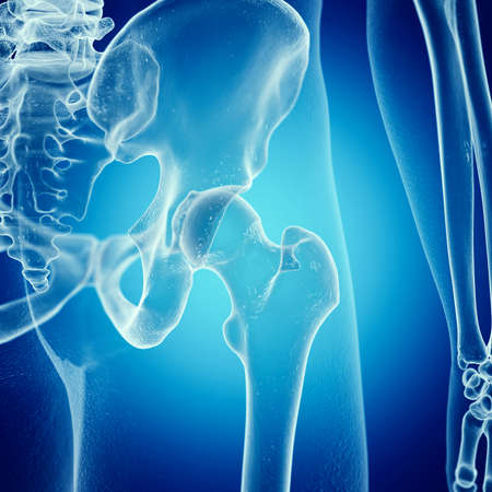 3d rendered medically accurate illustration of the hip joint Stok Fotoğraf
