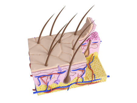 3d rendered medically accurate illustration of the human skin Stock Photo