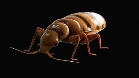 3d rendered medically accurate illustration of a bedbug