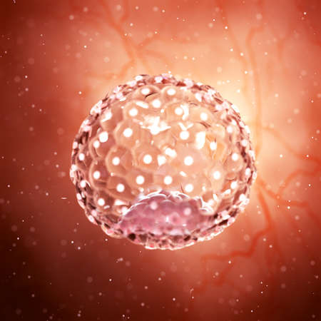3d rendered medically accurate illustration of a blastocyst Stock Photo
