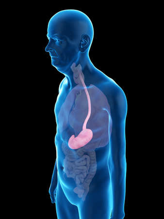 3d rendered medically accurate illustration of an old mans stomach