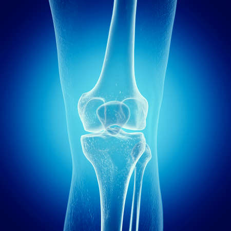 3d rendered medically accurate illustration of a skeletal knee Stock Photo