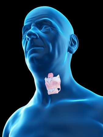 3d rendered medically accurate illustration of an old mans larynx
