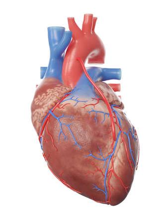 3d rendered medically accurate illustration of a heart with a bypass