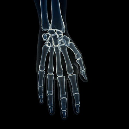 3d rendered medically accurate illustration of the hand bones Stock Photo