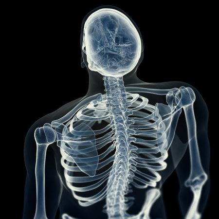 3d rendered medically accurate illustration of the skeletal back Reklamní fotografie