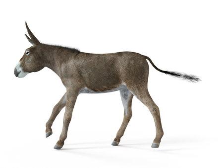 3d rendered illustration of a donkey 写真素材