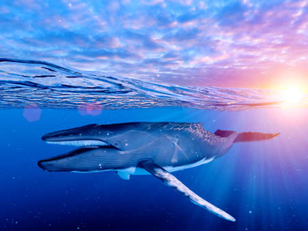 3d rendered illustration of a humpback whale