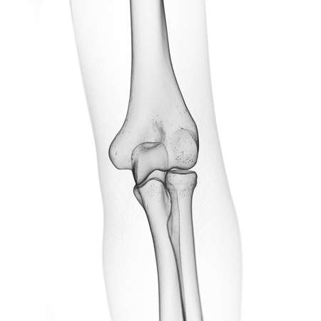 3d rendered medically accurate illustration of the skeletal elbow