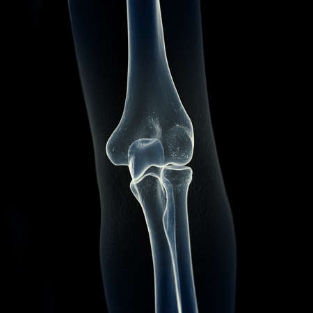 3d rendered medically accurate illustration of the elbow bones