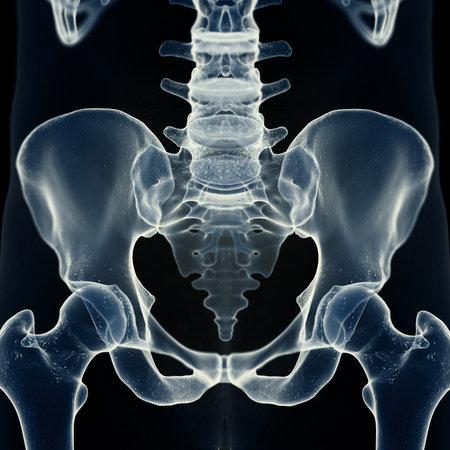 3d rendered medically accurate illustration of the sacrum Reklamní fotografie