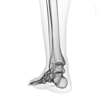 3d rendered medically accurate illustration of the skeletal foot Stock Photo