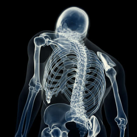 3d rendered medically accurate illustration of the skeletal back 写真素材