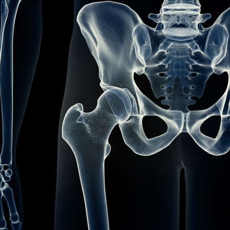 3d rendered medically accurate illustration of the hip joint Stock Photo