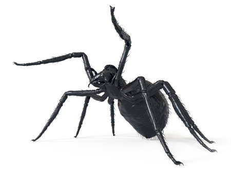 3d rendered illustration of a giant spider Stock Photo