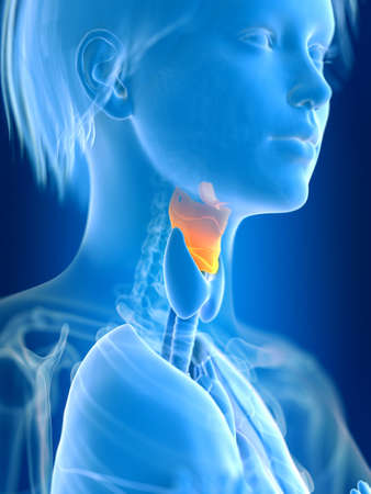 3d rendered medically accurate illustration of a females larynx Stok Fotoğraf - 108460990