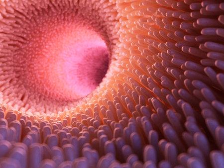 3d rendu illustration médicalement précise des villosités intestinales Banque d'images