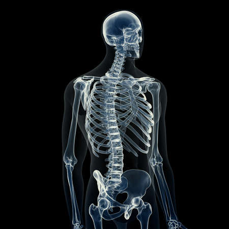 3d rindió la ilustración médicamente exacta del esqueleto masculino