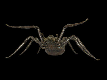 3d rendered illustration of a giant spider 版權商用圖片