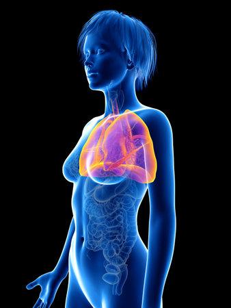 3D rendering accurato dal punto di vista medico illustrazione del polmone di una donna