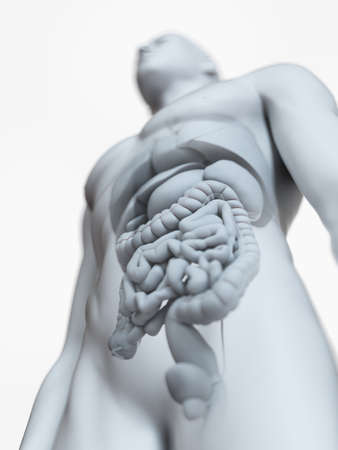 3d rendered medically accurate illustration of the male internal anatomy