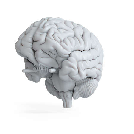 3d rendered medically accurate illustration of a white human brain Stock Photo