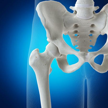 3D rendering illustrazione accurata dal punto di vista medico dell'articolazione dell'anca
