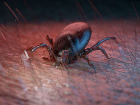 3d rendered medically accurate illustration of  a tick on human skin