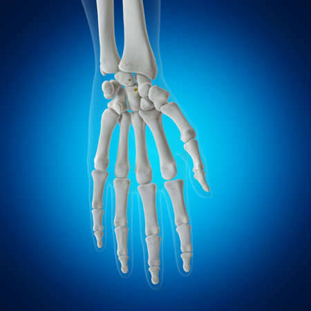 3d rendered medically accurate illustration of the skeletal wrist
