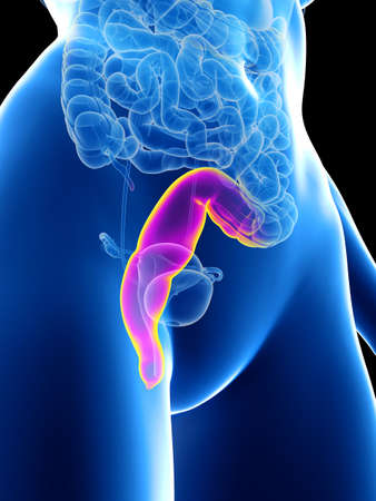 3d rendered medically accurate illustration of a womans rectum Stock Photo