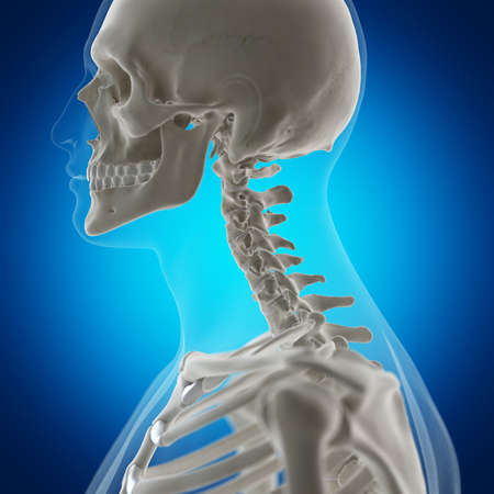 3d rendered medically accurate illustration of the skeletal neck Stock Photo