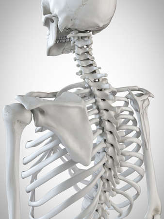 3d rendered medically accurate illustration of the skeletal back Stock Photo