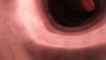 3d rendered medically accurate illustration of a healthy human colon from inside