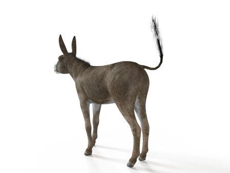 3d rendered illustration of a donkey Reklamní fotografie