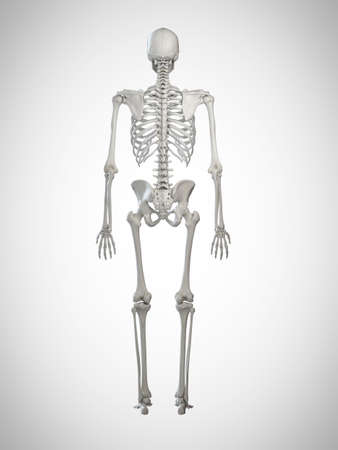 3d rendered medically accurate illustration of a human skeleton Stock Photo